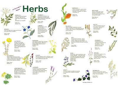 Herbs Easy Guide Poster