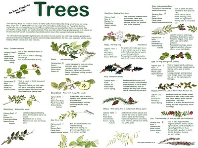 Trees Easy Guide Poster